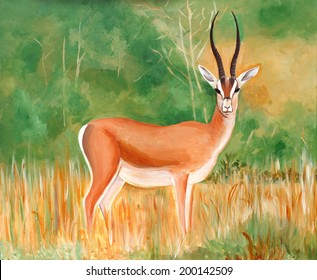 Original painting of a beautiful male Thomson's Gazelle