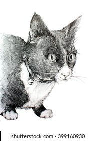 Original Pencil Drawing of a Black and White Tuxedo Cat