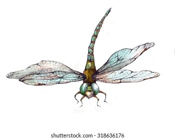 Original Watercolor Blue and Green Dragonfly Illustration