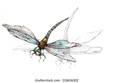 Original Watercolor Drawing of a Dragonfly Insect