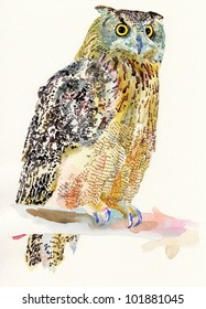 original watercolor painting of bird, owl on a branch (Bubo Virginianus Subarcticus). I am author of this illustration
