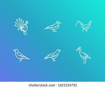Ornithology icon set and stork with skylark, peacock and pheasant. Bulbul bird related ornithology icon  for web UI logo design.