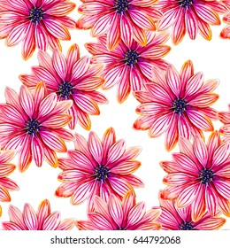Osteospermum flower watercolor seamless pattern. Bright tropical flowers isolated on white background, hand-drawn design for background, walpaper, textile, wrap and etc.