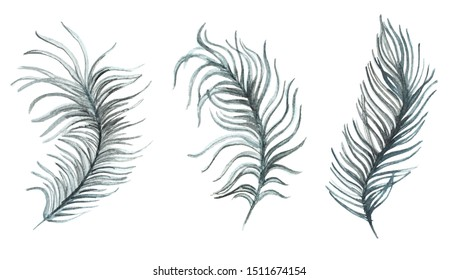 Ostrich feathers watercolor illustration collection for patterns or decorations.