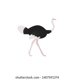 Ostrich flat design. Bird standing isolated. Zoo animal. African fauna on white background. Cartoon Illustration.