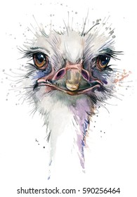 ostrich watercolor illustration