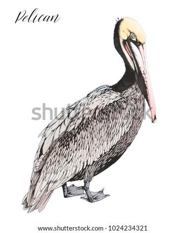 outline ink drawing standing pelican ocean stock illustration