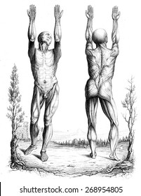 Outline of a theory and an anatomical nomenclature, vintage engraved illustration.
