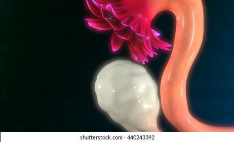 Ovary 3d illustration