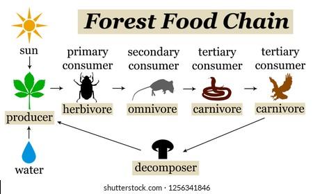Food Chain Images Stock Photos Vectors Shutterstock