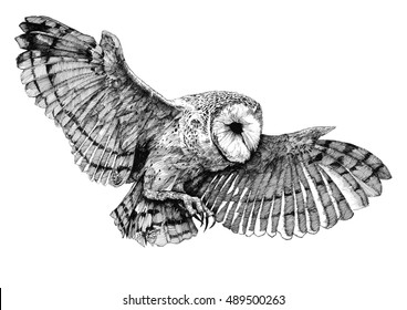 Pen and Ink Drawings Nature Images, Stock Photos & Vectors