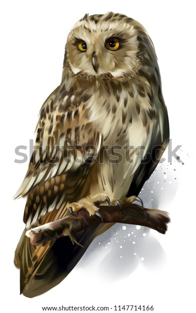 Owl sitting on a branch. Watercolor drawing