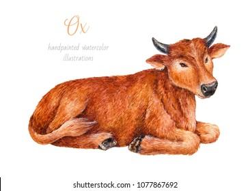 Ox. Watercolor illustration