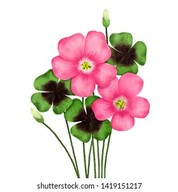 Oxalis Pink Flower Realistic Illustration