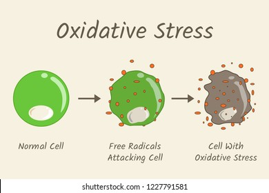 Oxidative Stress Diagram. Free radicals attacking cell.