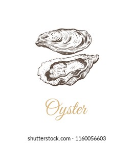 Oyster sketch illustration. oyster shell