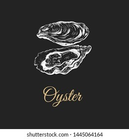 Oyster sketch illustration. oyster shell. Oysters on a black background