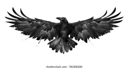 painted bird crow front on a white background