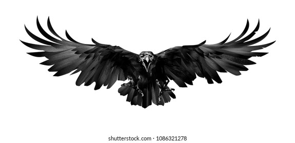 the painted bird is a Raven in front on a white background