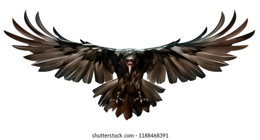 painted colored bird in flight raven front