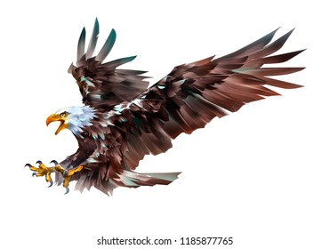 painted colored eagle bird in flight on a white background