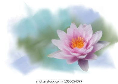 painted a pink water lily