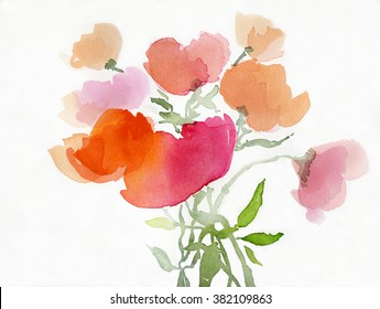 painted poppies in watercolor on white paper