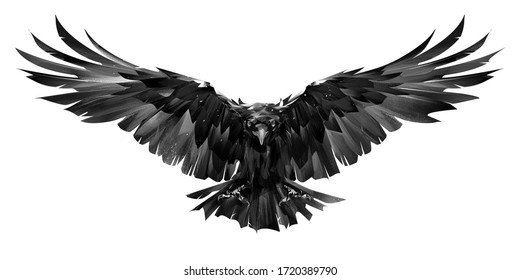 painted raven bird in flight on a white background
