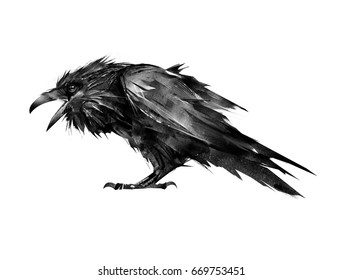 painted Raven sitting on a white background