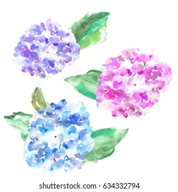 Painted Watercolor Hydrangea Flowers in Blue, Pink, and Purple