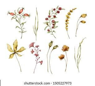 Painted watercolor set of autumn plants on white background. Leaves, twigs, berries, flowers and herbs. Elements for design