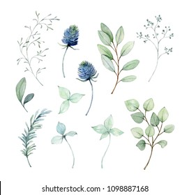 Painted watercolor set of leaves, twigs and blue thistle on white background. Elements for design. Valentine's Day, Mother's Day, Wedding, Birthday