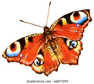 Painting of bright butterfly over white background