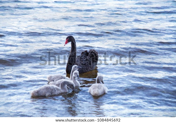 A painting with digital filter to simulate impressionism watercolour. A mother black swan with her 3 gray babies following her along. Taken from a photo.
