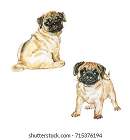 Painting pug dog portrait. Hand drawn set of cute puppies. Watercolor isolated pets illustration on white background