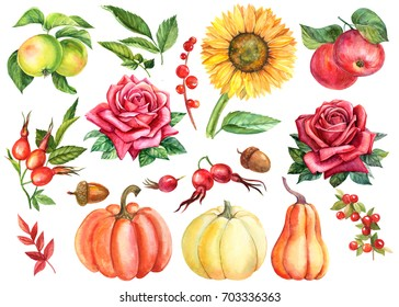 Painting watercolor. Autumn set of elements on an isolated background, pumpkins, wild rose berries, apples, red rose flower, sunflower, acorns, branches and leaves.