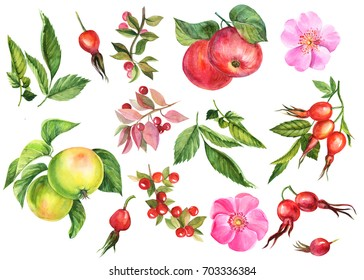 Painting watercolor, autumn set of elements on an isolated background, dogrose berries, apples, pink rose flower, branches and leaves.