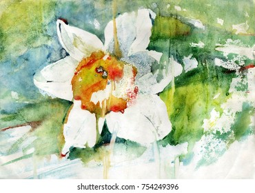 Painting watercolor flower narcissus