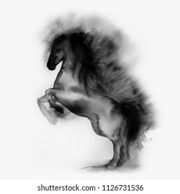 painting in watercolor, ink. Chinese, Japanese painting. horse on a light background. isolated. a black horse, a thoroughbred stallion. Race.