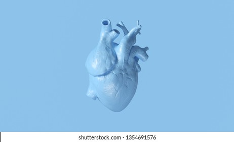 Pale Blue Anatomical Heart 3d illustration 3d render