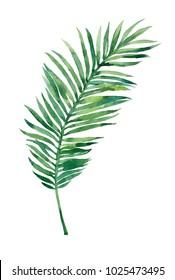 palm branch watercolor