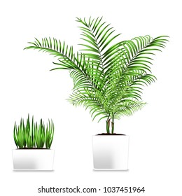 Palm and grass potted in the rectangular containers isolated on white. Element of home decor. The symbol of growth and ecology. Jpg illustration - Shutterstock ID 1037451964