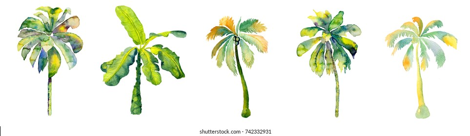Palm isolated. Watercolor coconut tree illustration isolated on white. Hand painted leaves and trunck. Exotic hawaiian jungle swimwear element. Watercolour palm drawing. Summer print.