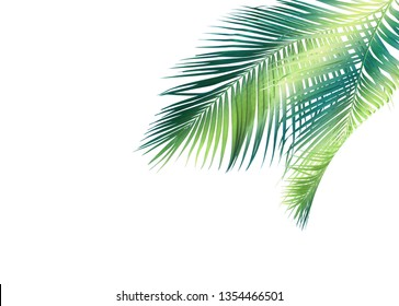 palm leaf for summer background