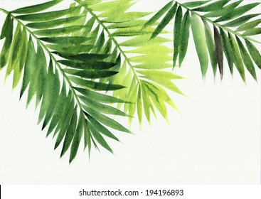 Palm leaves isolated on white background. Original watercolor painting.