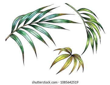 Palm leaves, watercolor hand drawing with a contour, isolated on white background.