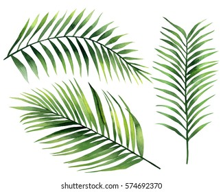Palm Leaves. Watercolor illustration on white.