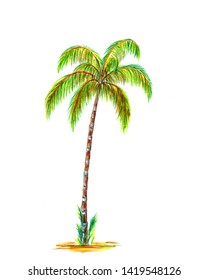 Palm tree asai. Hand painted watercolor illustration isolated on white background.