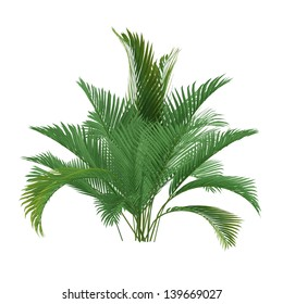 palm tree isolated chamaedorea cataractum image illustration leaves nature phoenix wood forest exotic green jungle