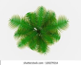 Palm tree on top view isolated